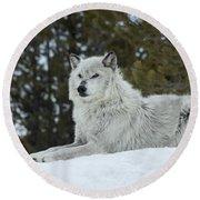 Wolf - Resting Round Beach Towel