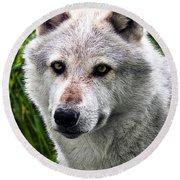 Wolf Alpha Male Round Beach Towel