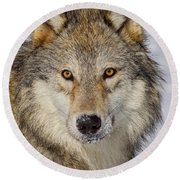 Wolf Face To Face Round Beach Towel