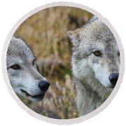 Wolf Glare Round Beach Towel