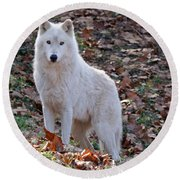 Wolf In Autumn Round Beach Towel