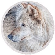 Wolf In Disguise Round Beach Towel