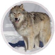 Wolf In Snow Round Beach Towel