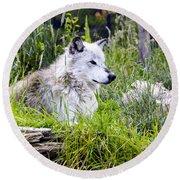 Wolf In The Grass Round Beach Towel