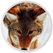 Wolf In The Wild Round Beach Towel