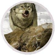 Wolf Protecting Kill Round Beach Towel