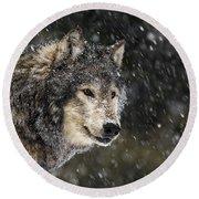 Wolf - Snow Storm Round Beach Towel