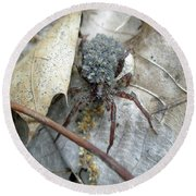 Wolf Spider And Spiderlings Round Beach Towel