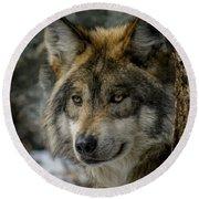 Wolf Upclose 2 Round Beach Towel