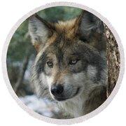 Wolf Upclose Round Beach Towel
