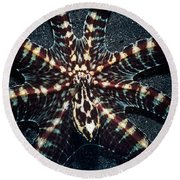 Wonderpus Octopus Round Beach Towel