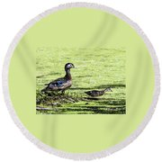 Wood Duck And Baby Round Beach Towel
