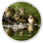 Wood Duck Babies Round Beach Towel