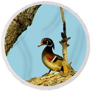 Wood Duck Drake In Tree Round Beach Towel