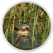 Wood Duck Drake Round Beach Towel