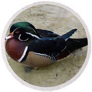 Wood Duck In The Water Round Beach Towel