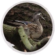Wood Duck Round Beach Towel