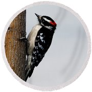Wood Pecker Round Beach Towel