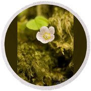 Wood Sorrel Round Beach Towel