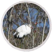 Wood Stork In A Tree Round Beach Towel