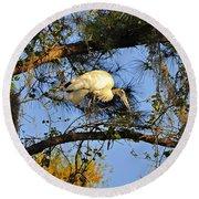 Wood Stork Perch Round Beach Towel