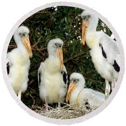 Wood Stork Young In Nest Round Beach Towel