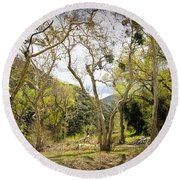 Woodland Glen In The California Vallecito Mountains Round Beach Towel