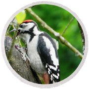 Woodpecker Swallowing A Cherry  Round Beach Towel
