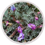 Woolly-pod Locoweed Closeup Round Beach Towel