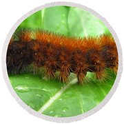 Wooly Bear  Round Beach Towel