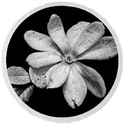Wounded White Magnolia Wide Version Black And White Round Beach Towel
