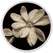 Wounded White Magnolia Wide Version Sepia Round Beach Towel