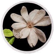 Wounded White Magnolia Wide Version Round Beach Towel