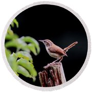 Wren - Carolina Wren - Bird Round Beach Towel