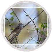 Wren In Spring 2013 Round Beach Towel