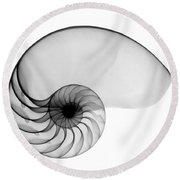 X-ray Of Nautilus Round Beach Towel