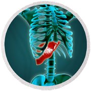 X-ray View Of Human Skeleton With Liver Round Beach Towel by Stocktrek Images
