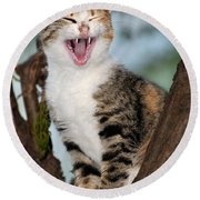 Yawning Cat Round Beach Towel