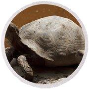 yawning juvenile Galapagos Giant Tortoise Round Beach Towel