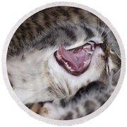 Yawning Kitten Round Beach Towel