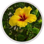 Yellow - Beautiful Hibiscus Flowers In Bloom On The Island Of Maui. Round Beach Towel