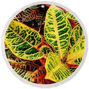 Yellow And Green Croton Round Beach Towel