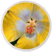 Yellow And White Hibiscus Round Beach Towel