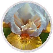 Yellow And White Iris Round Beach Towel