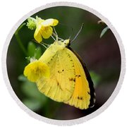 Yellow And Yellow Sulphur Butterfly Round Beach Towel