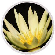 Yellow And Yellow Waterlily...   # Round Beach Towel