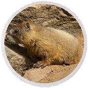 Yellow Bellied Marmot Checking Out The Neighborhood In Rocky Mountain National Park Round Beach Towel