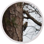 Yellow Bellied Sapsucker In The Pine Round Beach Towel