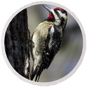 Yellow Bellied Sapsucker Round Beach Towel