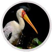 Yellow Billed Stork Peers At Camera Round Beach Towel
